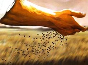 Chiccco di grano